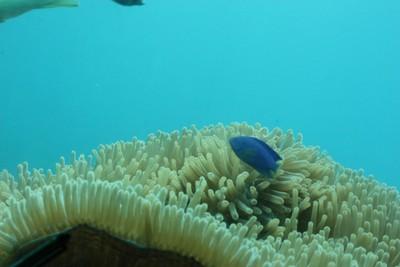 フィッシュアイ展望台の水中部分から海中をのぞく