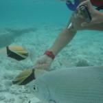 グアムで水中を撮影できるカメラを使ってみました - グアム 2012
