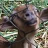 市内観光と動物園 - ちょっと近所のサイパン島へ 6